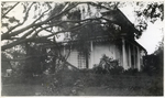 Downed trees, 49 South Street, Bridgewater (New England Hurricane)