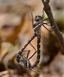 07: Mating Behavior